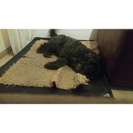 4Legs Dogzone Hondenstretcher Groen 102x132cm