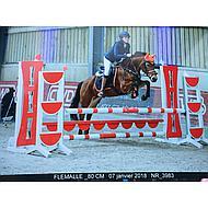 BR Vliegennetje Event Katoen met Oren Dutch Black Pony