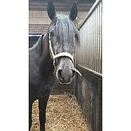 BR Halster Event Nylon Dubbel Verstelbaar Maple Rood Pony