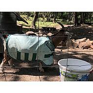 Rambo by Horseware Rambo Petite Hoody Ice Green 80/120