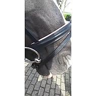 Pfiff Hoofdstel Staines Zwart-Lila Shett