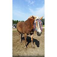 Pfiff Vliegenfrontriem Grijs-Blauw-Roze Pony