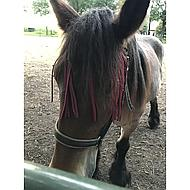 Kerbl Vliegenfrontriem Zwart Pony