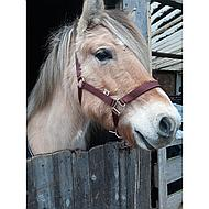 Agradi Halster Classic Groen Pony