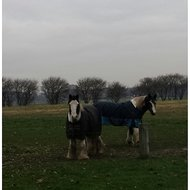 Harrys Horse Deken Wodan 0gr Fleece Black Iris 175cm
