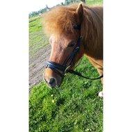 Harrys Horse Hoofdstel STOUT!  shetland