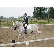 Harrys Horse Hoofdstelnummers