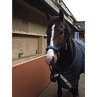 Harrys Horse Rij.touwhalster met teugels Zwart/roze cob