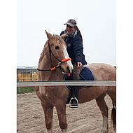 Harrys Horse Side Pull Rope Halter Reins Black/Pink Full