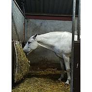 Harrys Horse Slow feeder Wit M
