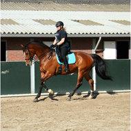 Harrys Horse Pad Original Paars