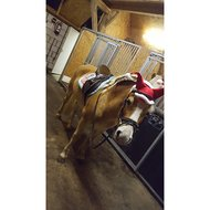Harrys Horse Zadeldek X mas 2 in 1 Full Vz