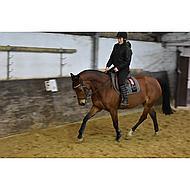 Harrys Horse Singel Deluxe Bruin 135cm