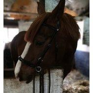 Harrys Horse Hoofdstel Bitloos Sidepull Zwart Full
