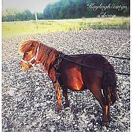 Hkm Longeersingel Teddy Zwart/zwart Shetlander