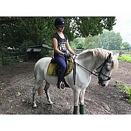 Kavalkade Hoofdstel Diandro mex Neusriem Bruin Pony