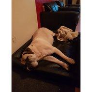 Bia Bed Hondenmand Ortho Zwart 6 100x80x15cm