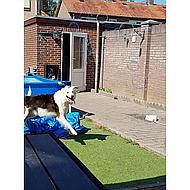 Bubble Dog Navulling Bellenblaas Pindakaassmaak 120ml