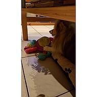 Agradi Stuffed Toy Chloe Cow 44cm