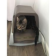 Scoopfree Kattenbak Ultra Zelfreinigend