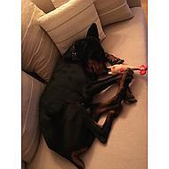Trixie Latex Kip 47cm