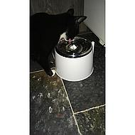 Cat It Drinkfontein Stainless Steel Top 2l