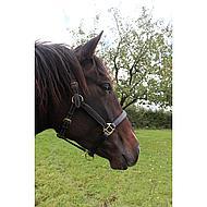 Harrys Horse Halster Leder Supreme Bruin Cob