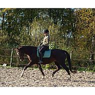 Harrys Horse Zadeldek New Elite Groen Full Dr