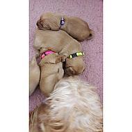 Beeztees Nylon Halsband Puppy 6 Stuks Assorti 17-25cmx10mm