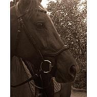 Harrys Horse Bride Anatomic Noir Cob