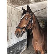 Harrys Horse Trense Anatomic Schwarz Vollblut