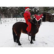 Harrys Horse Halsterset STOUT! Hazel Shetland