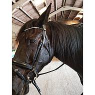 Harrys Horse Hoofdstel Amethyst Full