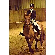 Harrys Horse Rijjas Montpellier Navy XXS