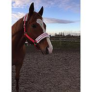 Harrys Horse Halster Lyrics II Rood Pony