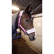 Harrys Horse Halster Lyrics II Navy Pony
