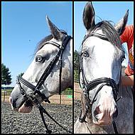 Kavalkade Trenshoofdstel Polan Engelse Neusriem Zwart Pony