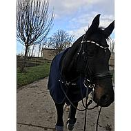 Kavalkade Stang en Trens Hoofdstel Comtess Zwart Pony