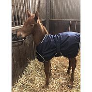 Harrys Horse Veulendeken Newborn Navy 65