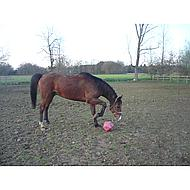 Shires Voerbal Pink 23cm