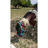 Shires Headcollar Topaz Nylon Orange Foal