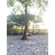 Shires Equine Scratcher Black 64 cmx 28 cm