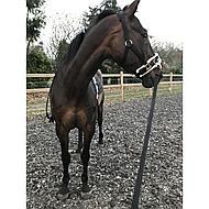 Shires Kaptoom Cavesson Fleece Onderlegd Black XFull