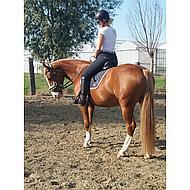 Kavalkade Hoofdstel Ivy met Bontje Zwart Pony