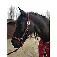 Amigo Halster Navy Silver Pony