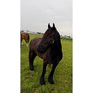 Harrys Horse Grazing Muzzle Air XS