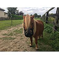Harrys Horse Grazing Muzzle Air S