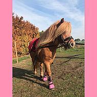 Horka Springschoen Jolly Pink Shetty