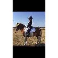 Harrys Horse Zadeldek Next Oranje/navy Full Dr