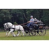 Harrys Horse Beenbeschermers Flextrainer Tiny Zwart Pony